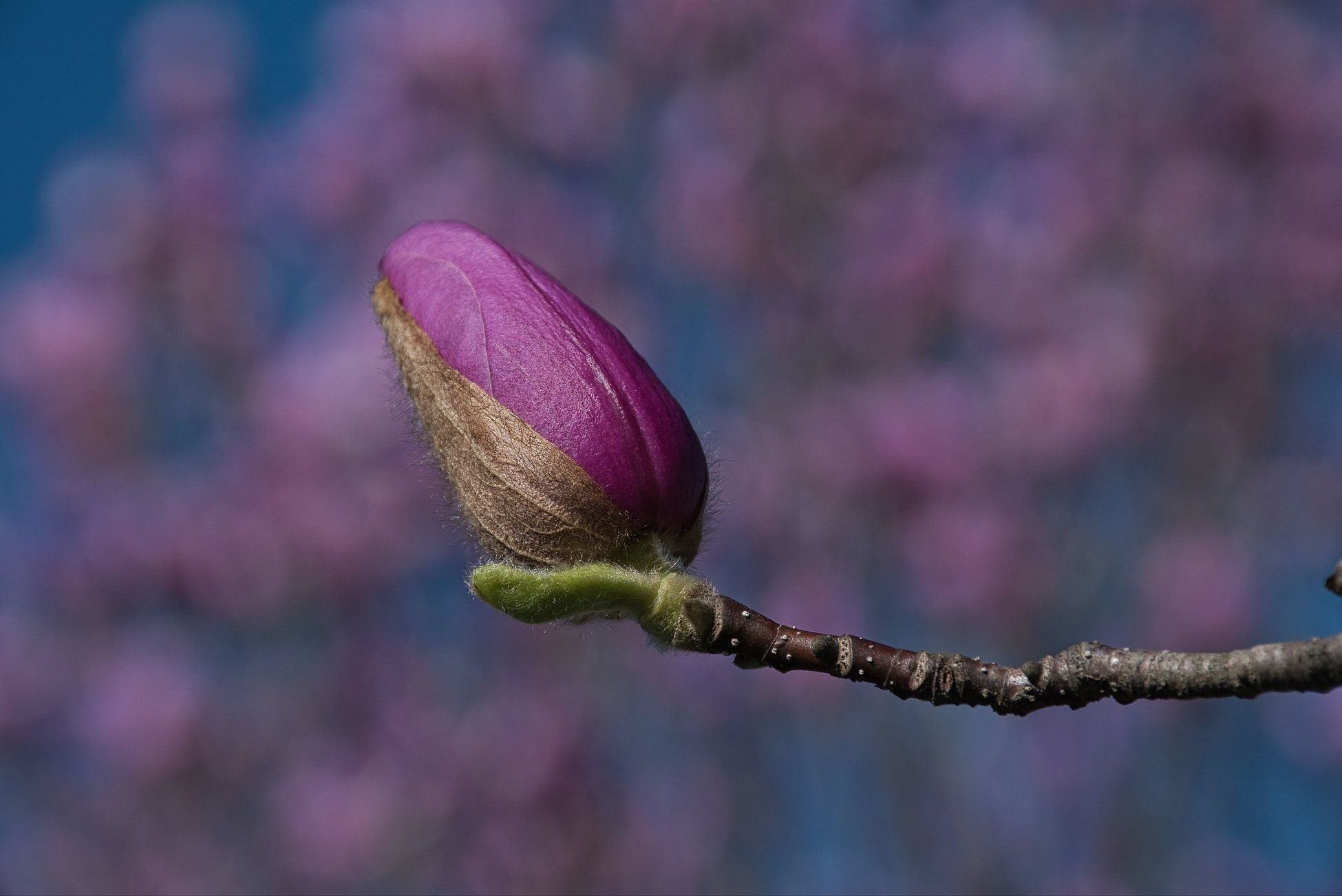 to show a flower blooming from a tiny bud